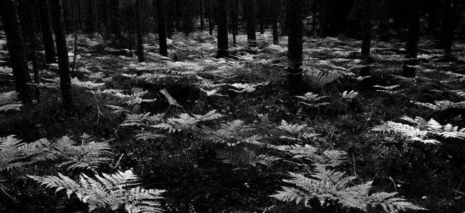 black-and-white-black-and-white-environment-1405123.jpg